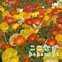 ◆アイスランドポピー ミックス(花色指定できません) 苗 9センチポット 3号