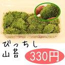 【山苔】貼るだけで盆栽や鉢植えが素敵になる!混じりけなしの山苔 ヤマゴケ こけ コケ 苔 【05P07Feb16】