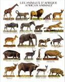 迷你海报(衬纸付)African Animals[ミニポスター(台紙付)African Animals]