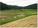 27年産高級米●超希少米●石川県新嘗祭献上米 極上JAS認定コシヒカリ玄米5kg【送料無料】