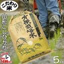 【こだわり米】「有機栽培米こしひかり」(山形県置賜地方産)5kg【あす楽対応】白米・玄米・3分搗き・7分搗き