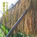 茨城県 涸沼産 冷凍しじみ 大粒 1kg 大和しじみ 【砂抜き済】