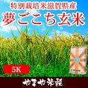 特別栽培米滋賀県産夢ごこち玄米5Kお米【選べる搗き方 白米・ハイガ米・玄米・8分つきなど】完全真空包