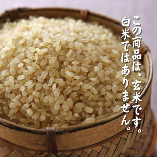 【30年産】【玄米】新潟県産特選コシヒカリ10...の紹介画像3