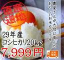 29年 千葉県産 こしひかり 20kg【...