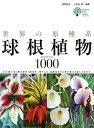 初心者からマニアまでお勧め!「世界の原種系球根植物」 1冊