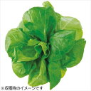 水耕栽培器 Green Farm グリーンファーム 水耕栽培種子 サラダ菜 5袋セット ユーイング UH-LA06-5SET