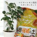 【送料無料】スターターキット<レモンの木>育てやすく甘みを感じるマイヤーレモン苗と土と肥料の三点セットおしゃれ果樹 インスタ映え おうち時間