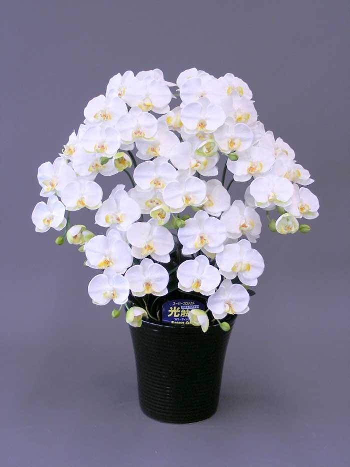 【送料無料】☆胡蝶蘭加工光触媒M16本立ち☆抗菌作用・消臭効果がある光触媒の造花でお部屋の空気を爽やかに♪胡蝶蘭加工光触媒 驚くほど完成度の高い光触媒の造花です。胡蝶蘭の中で一番人気の商品です。贈答用としても大変喜ばれます。リビングなどのインテリアにおすすめです。