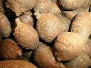 アピオス(アメリカほど芋)種イモ5粒 中(約4、5センチ程)