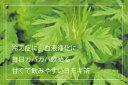 四国産のよもぎで創る甘い「よもぎ茶50パック入」片付け簡単ティーバッグ仕様Kotoriworksオリジナル(低温暗室乾燥)未サラシ袋で安心
