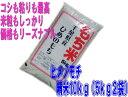 【新米】28年産  千葉県産ヒメノモチ 白米 10kg(5kg×2)【もち米】