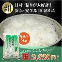 ショッピング無洗米 29年産 千葉県産コシヒカリ 無洗米 5kg