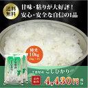 ショッピング10kg 29年産 千葉県産 コシヒカリ 白米10kg(5kg×2)