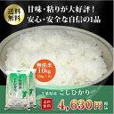 ショッピング無洗米 29年産 千葉県産コシヒカリ 無洗米 10kg(5kg×2)