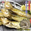 日本海のハタハタ一夜干し業務用たっぷり1kg(約20〜25尾...