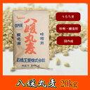 石橋工業 八媛丸麦 20kg/国産