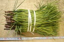 高野槇(コウヤマキ)切り枝SS 30本セット お供えの花 お盆 お彼岸 仏事 葉物