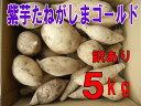 予約1割増量 訳あり紫芋種子島ゴールドサイズ混在5kg入り
