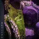 藝術家名: A行 - 【送料込み】-異彩ヴァイラル 2nd single 淑女 2019/03/14 Release-※限定50枚生産【New single】