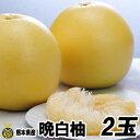 熊本県産 晩白柚(ばんぺいゆ) 1玉