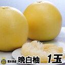【送料無料】熊本県産 晩白柚 2玉