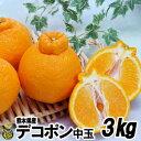 【送料無料】熊本県産 デコポン3kg(8玉?12玉)