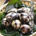 【国産 蛤】熊本産 天然 活はまぐり 100g ぷりぷりの ...
