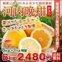 河内晩柑 愛媛産 訳あり 和製グレープフルーツ 5kg 1kg増量 合計6kg
