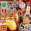 お歳暮 送料無料 ギフト りんご 青森 葉とらず サンふじ 贈答用 5kg(18〜20玉) ギフト プチ