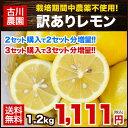 【栽培期間中農薬不使用】長崎県産『古川農園』訳ありレモン1箱1.2kg(約8玉〜12玉前後