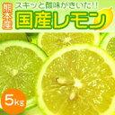 スキッ!!と酸味のきいた爽やかな香りの熊本産国産レモン!!国産レモン5kg