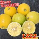 訳あり レモン 1.5kg 送料無料 熊本県産 (約5玉-15玉前後) 2セット購入で1セット分おまけ、3セット購入で2セット分おまけ※/サイズ不選..