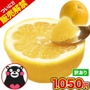 和製グレープフルーツ 河内晩柑 1.5kg 送料無料 河内 晩柑 熊本県産 旬 の みかん 2セット購入で1セット・3セットな…