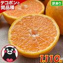 デコみかん 1.5kg 訳あり 送料無料 みかん デコポン 同品種 熊本県産 柑橘 産地直送 取り寄せ 箱 お取り寄せ お取り…