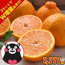 完熟デコみかん 1.5kg 熊本県産 訳あり 送料無料 デコポン 同品種 家庭用 柑橘 産地直
