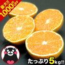 【2セット購入で1,000円OFF】 熊...