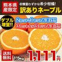 【送料無料】【ダブル増量】訳ありネーブルオレンジ1.5kg★...