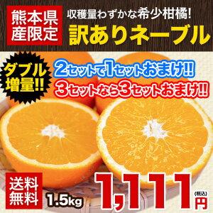【送料無料】【ダブル増量】訳ありネーブルオレンジ1.5kg★安心・安全の熊本県産★2セット購入で1セット増量!3セット購入なら3セット増量!!買えば買うほどお得♪《4月中旬-5月上旬頃より順次出荷》