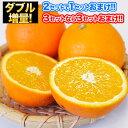 ネーブル オレンジ 1.5kg 送料無料 訳あり 安心安全 熊本県産 旬 の みかん 2セット購入で1セット 3セット購入なら3セット増量 ※複数購..