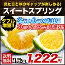 【送料無料】【熊本県産】新種の柑橘!スイートスプリング 1.5kg (3L〜Lサイズ/3L-L混合) ※複数購入の場合1箱におま…