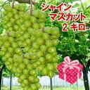 入荷しました!熊本県産 シャインマスカット1.8〜2kg 送料無料 産地直送 最