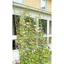 【送料無料!】自然のカーテン 伸縮立掛けタイプ第一ビニール 緑のカーテン(伸縮立掛けタイプ)