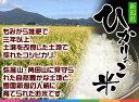 【送料無料】☆お米の新星☆新潟産 こしいぶき 5kg 白米(令和元年産)[贈答兼備]