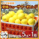 【送料無料】愛媛ニューサマーオレンジ(小夏)ファミリー用5kg「ファミリー小夏5」