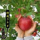 【青森 りんご】【特選 サンふじ りんご 5kg】       【送料無料】 りんご農家自身が直接販