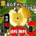 【青森 りんご】【葉とらず サンふじ りんご 10kg】【送料無料】りんご農家自身が直接販売だから安い!!おいしい!!