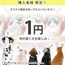 ご購入者様限定 | ドッグフード キャットフード お試し 1円サンプル 【犬 おやつ 猫 おやつ】【犬用品/猫用品】