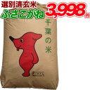 新米入荷 令和1年産 新米 コシヒカリを超えたうまさ!! ふさこがね玄米10kg 玄米食