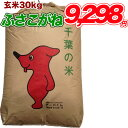 新米入荷 令和1年産 新米 千葉県 ふさこがね 玄米 30kg コシヒカリを超えたうまさ 玄